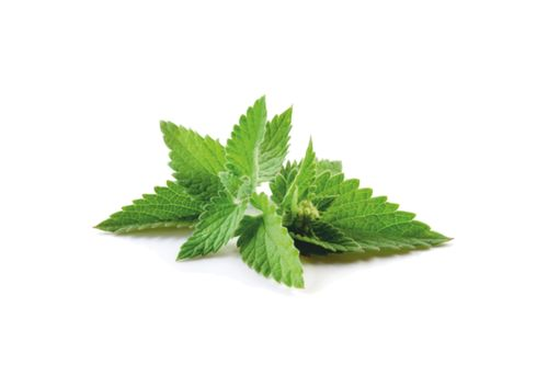 Flavour Fresh Mint - 10ml
